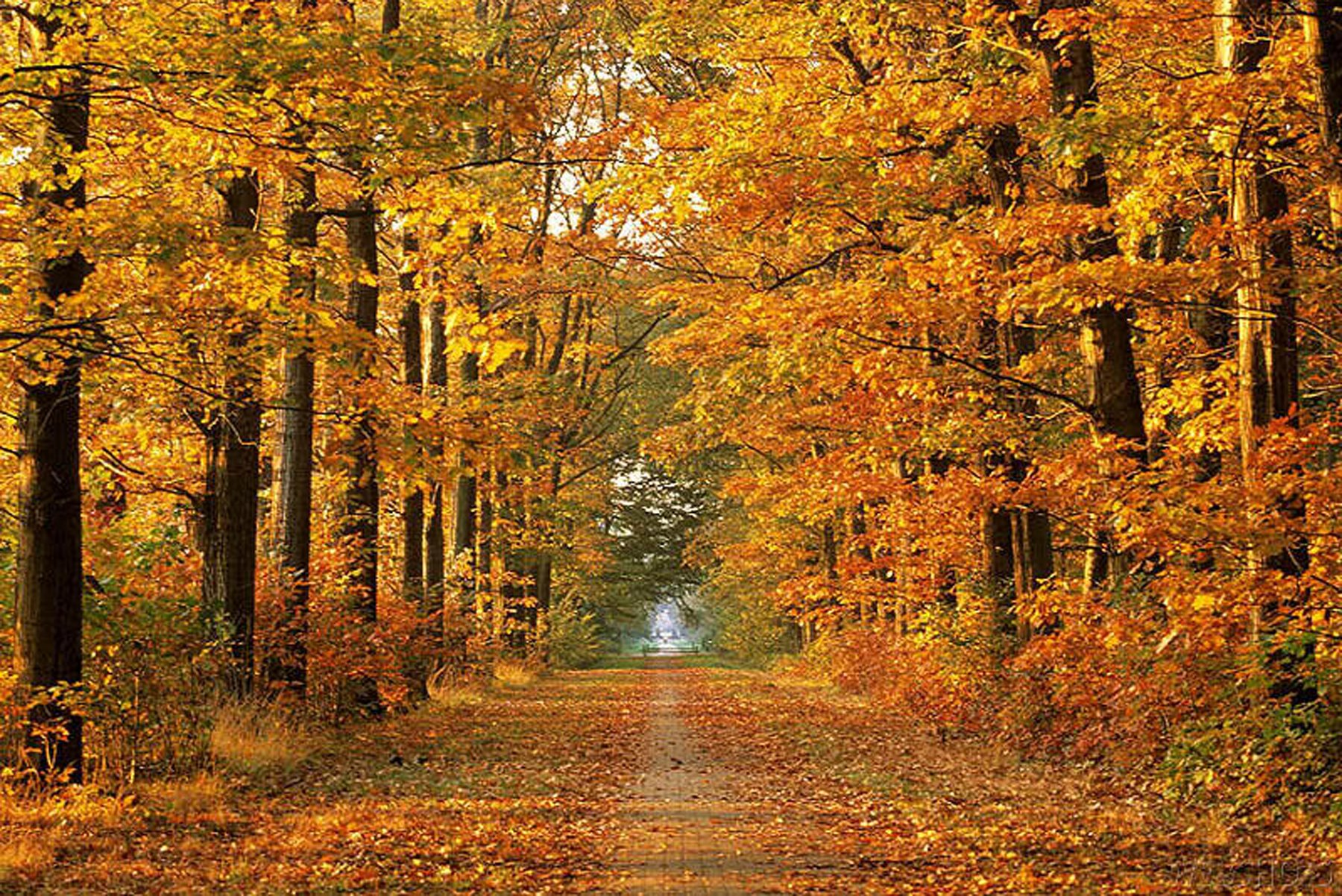 Happy thanksgiving paging supermom - Pics of fall scenes ...