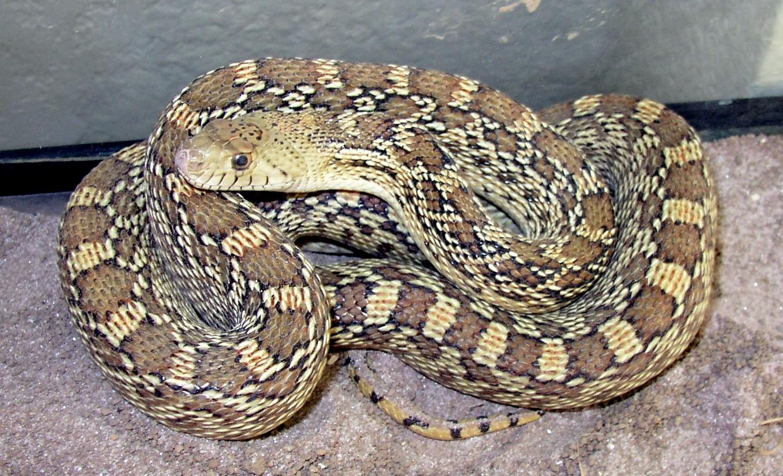 Supermom Vs The Snake Paging Supermom
