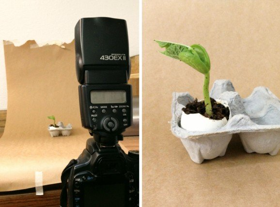The Making of a Seedling Time Lapse Video