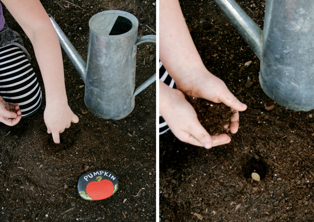 pumpkin seeds planting instructions