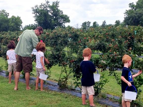 Picking Berries for Homemade Jam via @PagingSupermom