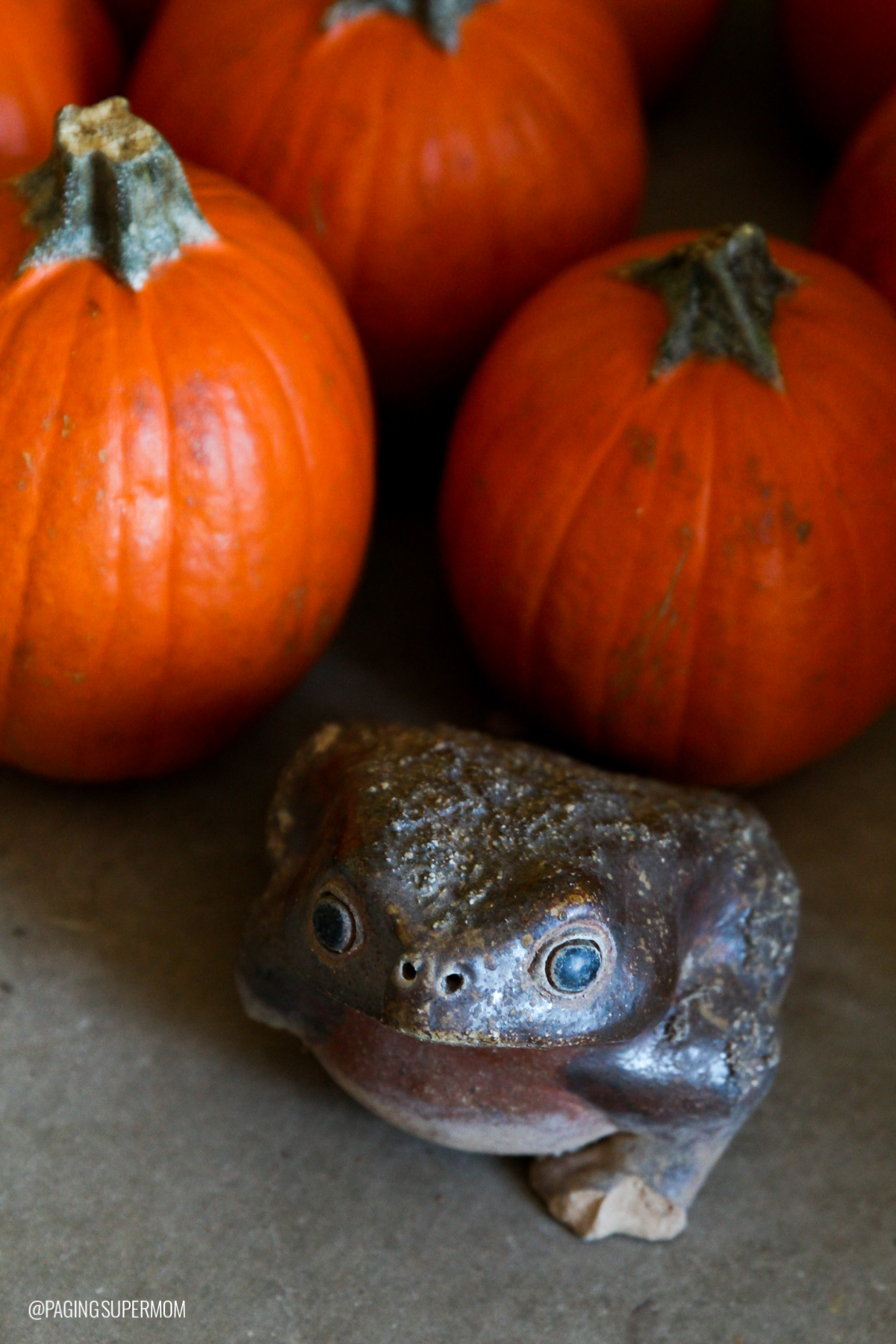 A warty frog is a witch's pet via @PagingSupermom